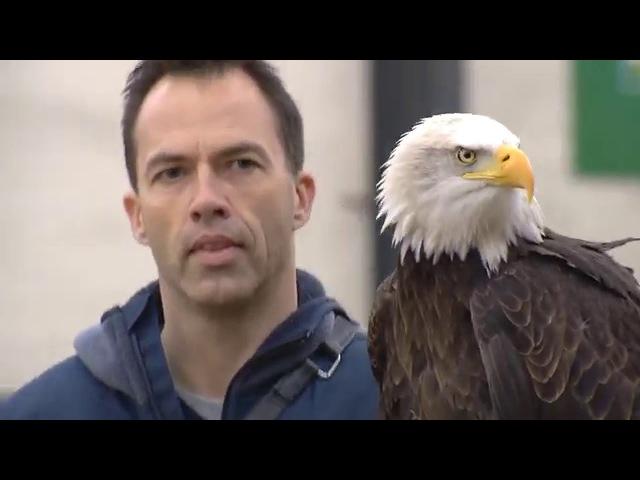 Politie zet roofvogels in om vijandige drones uit de lucht te halen