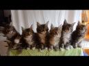 ТАНЕЦ КОТОВ/DANCE OF CATS/ - ЭТО ПРОСТО КРУТО.
