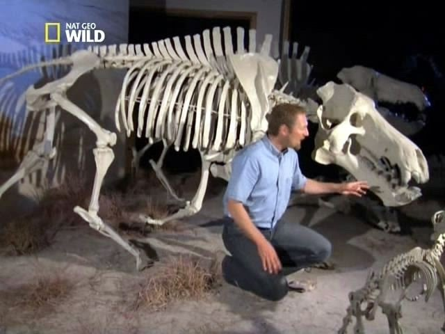 Доисторические хищники — Адский кабан (Документальные фильмы, передачи HD)