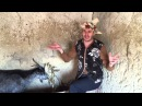 Emisiunea: DaSuntRomân... Capra cu trei iezi,in rusă