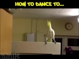 Как надо танцевать под разную музыку