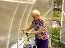 Галина Кизима - Выращивание безполивной рассады томатов