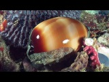 Molluscs - Reef Life of the Andaman - Part 14
