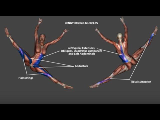 Renverse Tilt Jump Ronverse Dance Ballet Anatomy Kinesiology