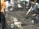 [Котенок]Рынок животных в Китае [кошка]