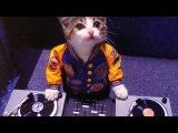 Котик делает крутой музонCat makes music