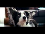 От чего так предан пёс... Валентин Гафт