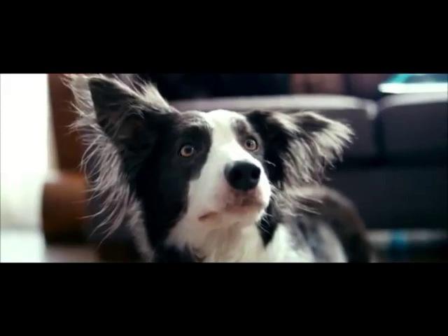 От чего так предан пёс Валентин Гафт