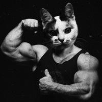 vojnov_vova avatar