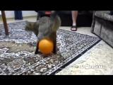 Кот, шарик и электростатика