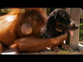 Любовь и дружба животных #Любовь не знает границ #Счастливые животные #Friendship of animals