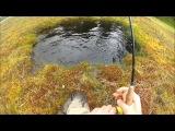 Рыбалка в Норвегии, форель