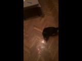 Кот ямакаси (full version)