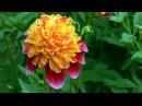 FLOWERS OF PASSION - FOR YOU MY LOVE - ERNESTO CORTAZAR - MORIR DE AMOR