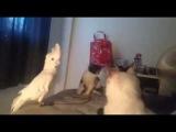 Попугай разговаривает с котятами на кошачьем)