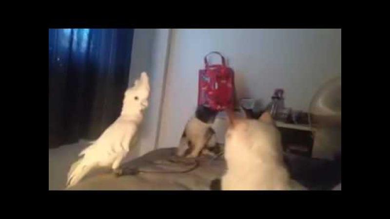 When parrot disguise in cat group смотреть онлайн без регистрации