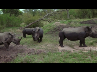 Дикая южная африка сафари  wildlife south africa safari (2012)