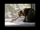 Песенка про кота )))