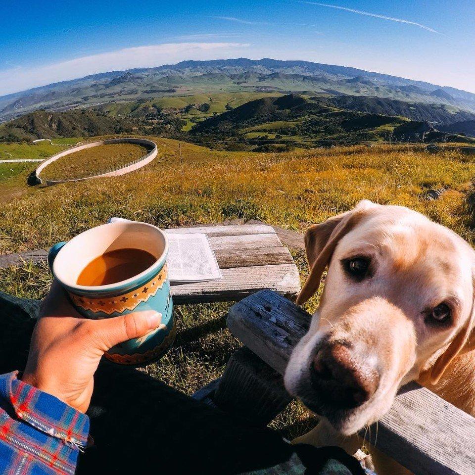 собака на природе с кофе