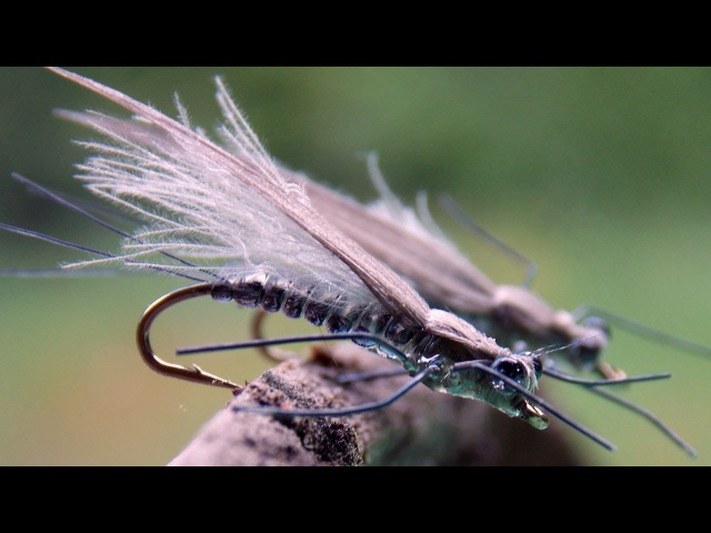 Little adult stonfly realistic imitation fly tying instructions by Ruben Martin
