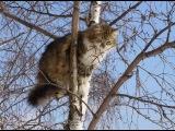 Спасение #10. Кошка на дереве пробыла три дня.  Город Улан-Удэ