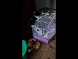 Котята спасенные от живодеров с СинТЗ ищут дом