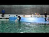 Дельфинарий на Крестовском СПБ. Белуха умеет рисовать!