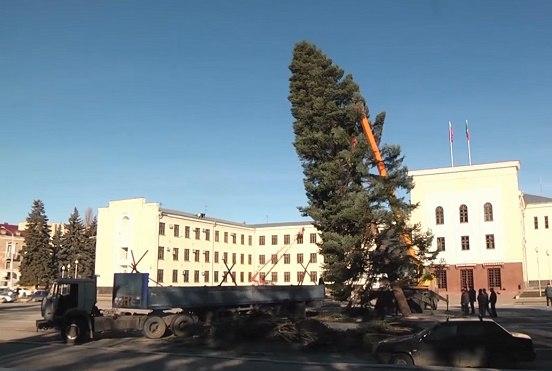 Главную елку Карачаево-Черкесской республики срубили в Зеленчукском районе
