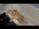 жирный жырный кот в ванной