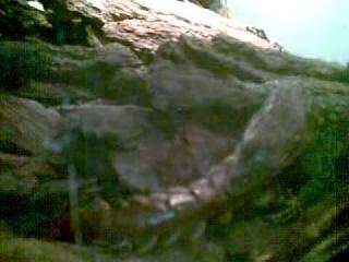 Варан Ауффенберга против гигантской многоножки