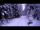 По снежному лесу на Irbis Dingo T125 и T150