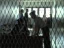 Крестная Мать - Bella Mafia (Дэвид Грин, 1997, криминальная драма)-1