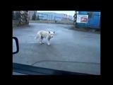 Nastroenie+ Озвучка животных