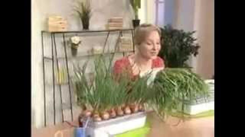 удобрения для зеленого лука