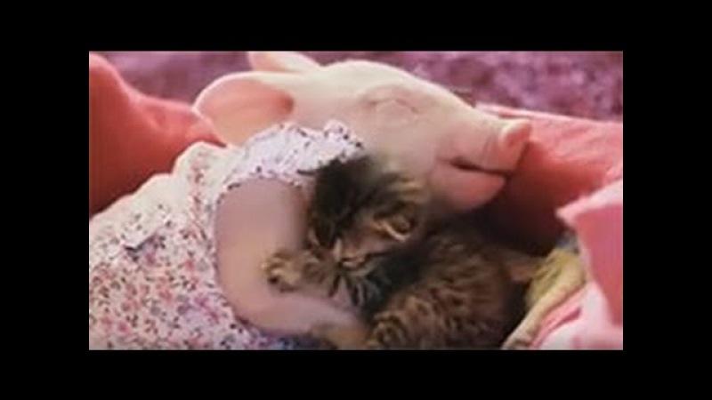 Поросенок и котенок водят нежную дружбу