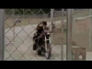 Промо + Ссылка на 3 сезон 5 серия - Ходячие мертвецы / The Walking Dead