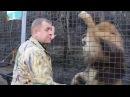Конфликт с Поклонской: Зубков зовет на помощь льва