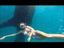 Купание с китовыми акулами на Филиппинах
