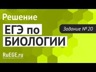 Решение демоверсии ЕГЭ по биологии 2016 | Задание 20. [Подготовка к ЕГЭ (RuEGE.ru)]