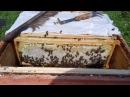 Медосбор 2016 Один день из жизни пчеловода