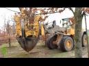 Выкопка деревьев (крупномеров)