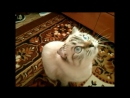 Говорящая кошка Муся 2