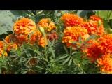 Интернет-магазин чудогрядка.рф в программе «Добрый урожай на подоконнике» на телеканале «Загородная жизнь»