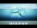 Телеканалы НКТВ - Viasat Nature