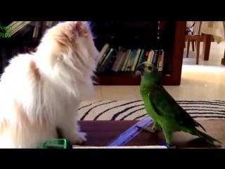 Наглый попугай и кот! Приколы с животными