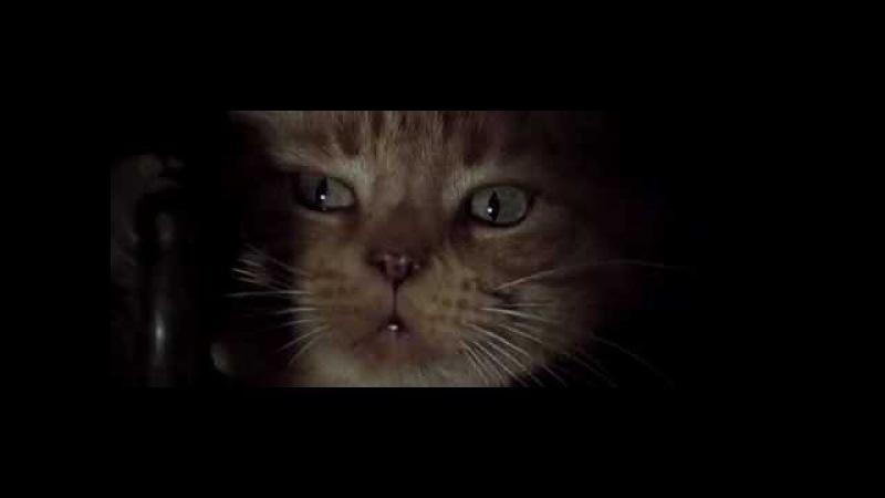 Alien (1979) scene with Jonesy, Ripleys cat