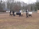 Police K9 training Patrol dog school 2011