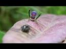 А пауки-то в Австралии могут завлекать не хуже, чем птицы в Новой Гвинее