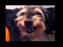 Собака и мандарин. Прикол. Dog and tangerine. funny
