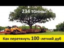Как перевозят деревья (100 - летний дуб) Old Oak Move